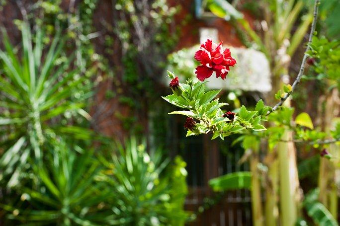 hacienda-dzibikak_0022.jpg
